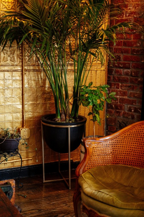 Potted-plants-and-retro-furniture-in-cozy-room.jpg