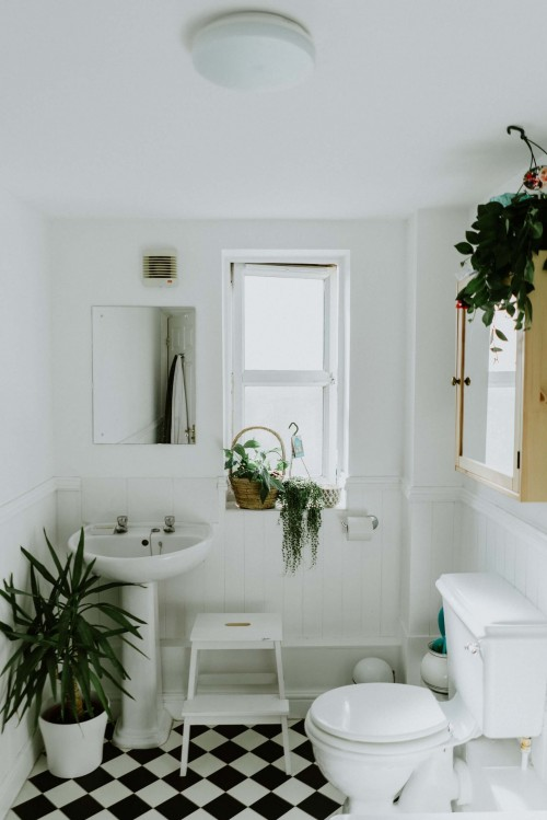 white-sink-and-green-potted-plant-at-bathroom.jpg