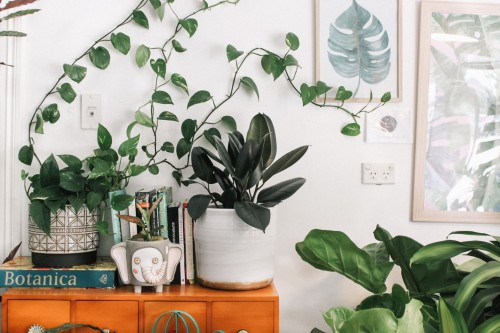 green-leafed-plant-in-bowl-on-brown-wooden-table-beside-leaf-painting-frame-on-a-white-wall-inside-the-room.jpg