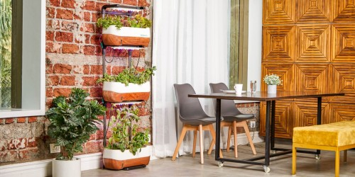 plant-on-black-metal-rack-near-wooden-table-with-chair-and-brown-wooden-wall-insde-table-image.jpg