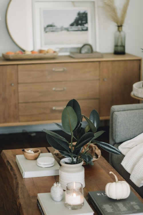 potted-plant-on-top-of-coffee-table-inside-a-brown-sofa-and-wooden-drawer-near-white-wall-photo.jpg