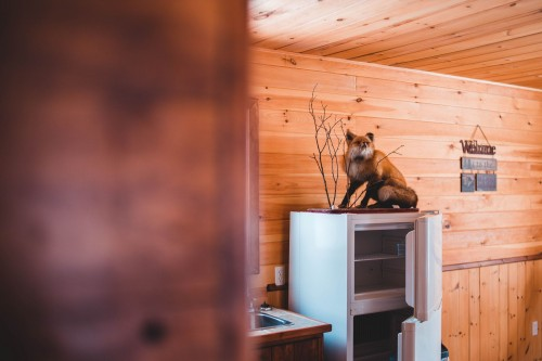 brown-fox-taxidermy-on-top-of-white-top-mount-refrigerator-near-wooden-wall-photo.jpg