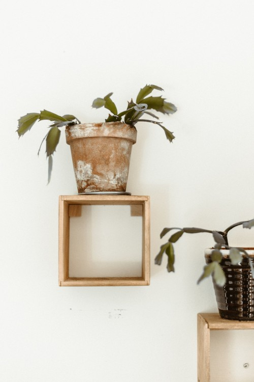 brown-potted-green-leafed-plant-on-rectangular-shelf-on-white-wall-photo.jpg