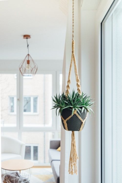 green-hanging-potted-plant-on-black-pot-near-glass-window-at-daytime-modern-interior-photo.jpg