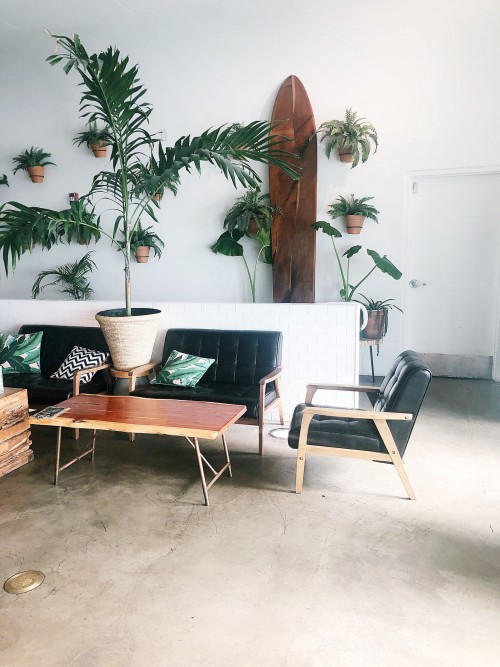 green-and-brown-wooden-table-and-chairs-with-green-plant-on-white-pot.jpg
