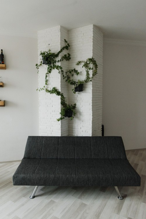 Green-Plant-on-Black-Sofa.jpg