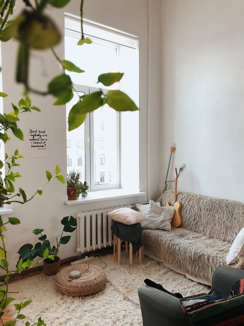 Green-Plants-with-grey-sofa-Inside-A-Living-Room.jpg